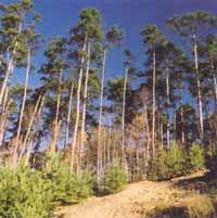 Lesní hospodaření